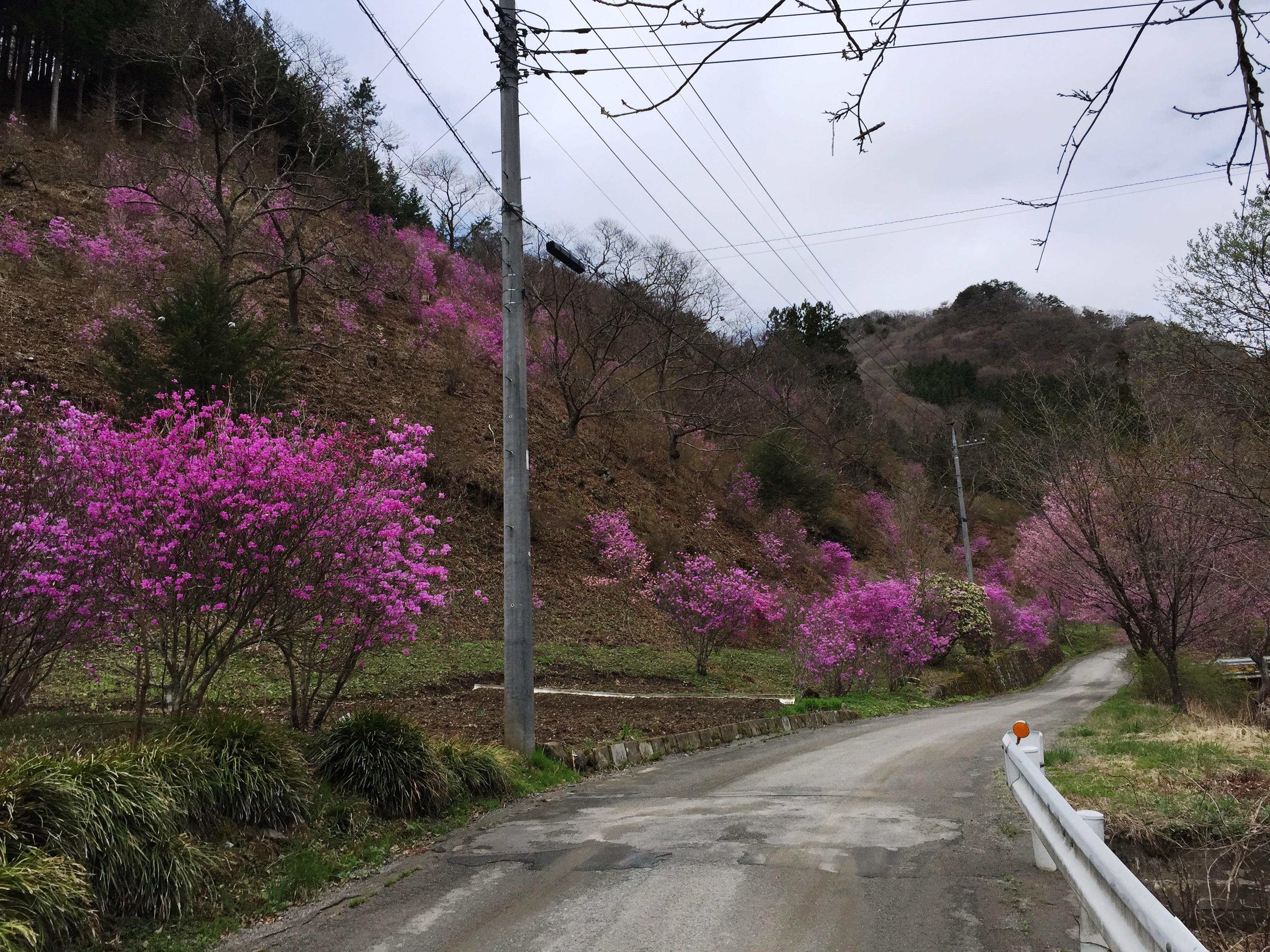 http://www.uenomura.ne.jp/blog/photonews2/20150421_010911273_iOS-s.jpg