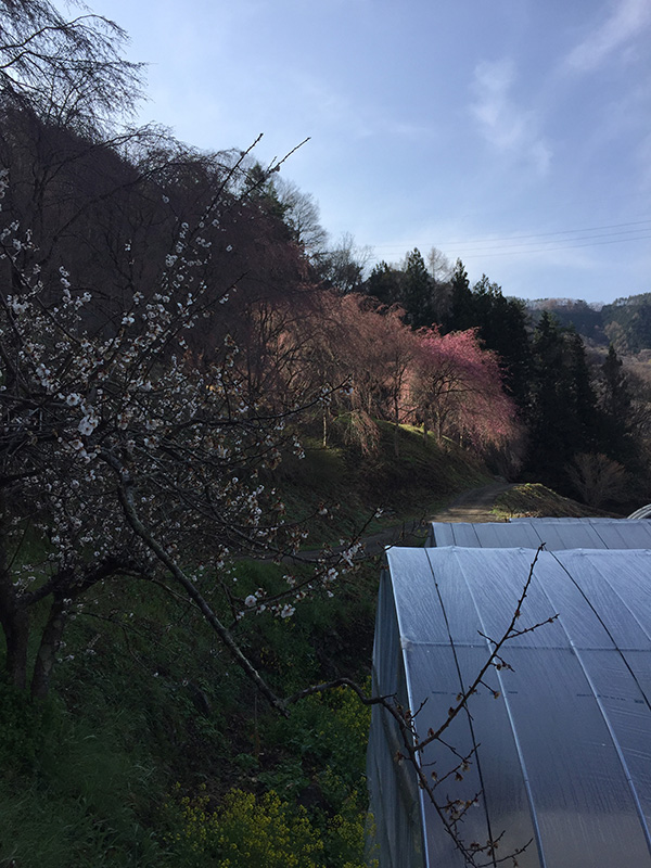 http://www.uenomura.ne.jp/blog/photonews2/20160406-08.jpg