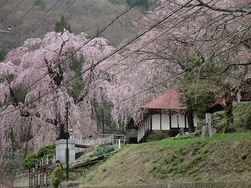 http://www.uenomura.ne.jp/blog/photonews2/20160408-03.jpg
