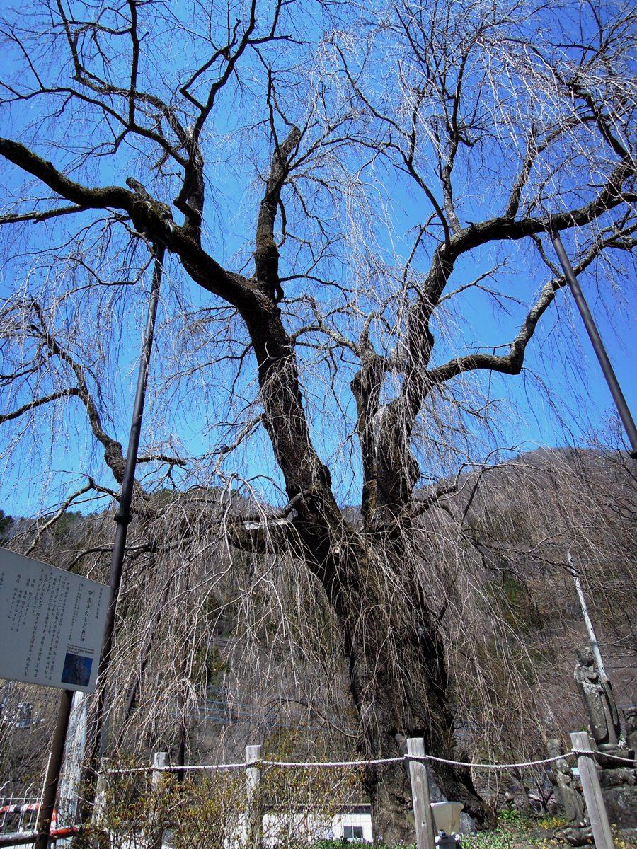 http://www.uenomura.ne.jp/blog/photonews2/DSCN6136-001.JPG