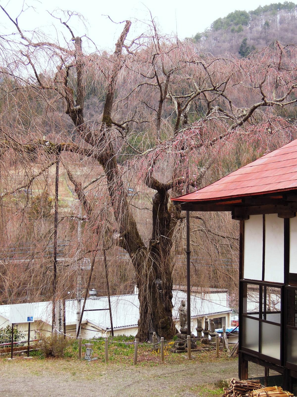 http://www.uenomura.ne.jp/blog/photonews2/DSCN6160-001.JPG
