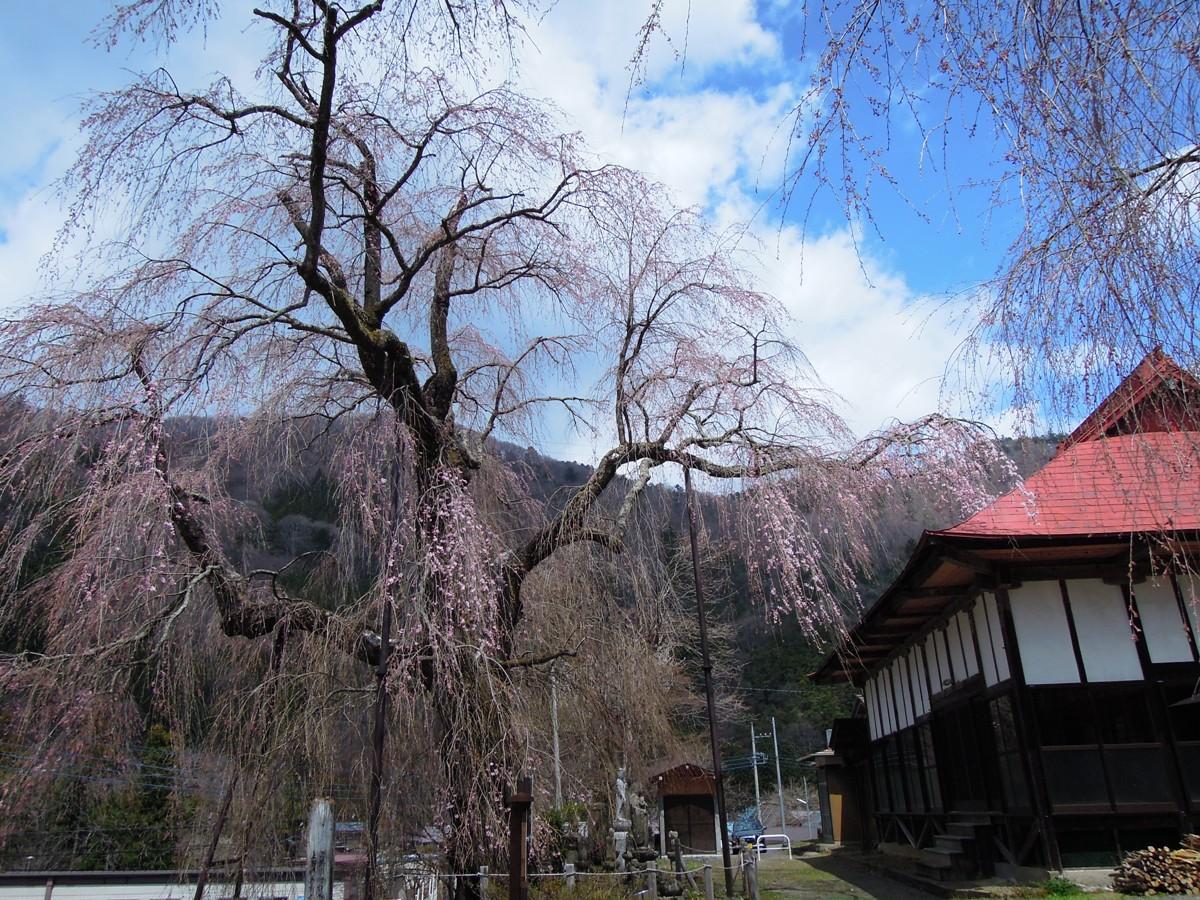 http://www.uenomura.ne.jp/blog/photonews2/DSCN6221-001.JPG