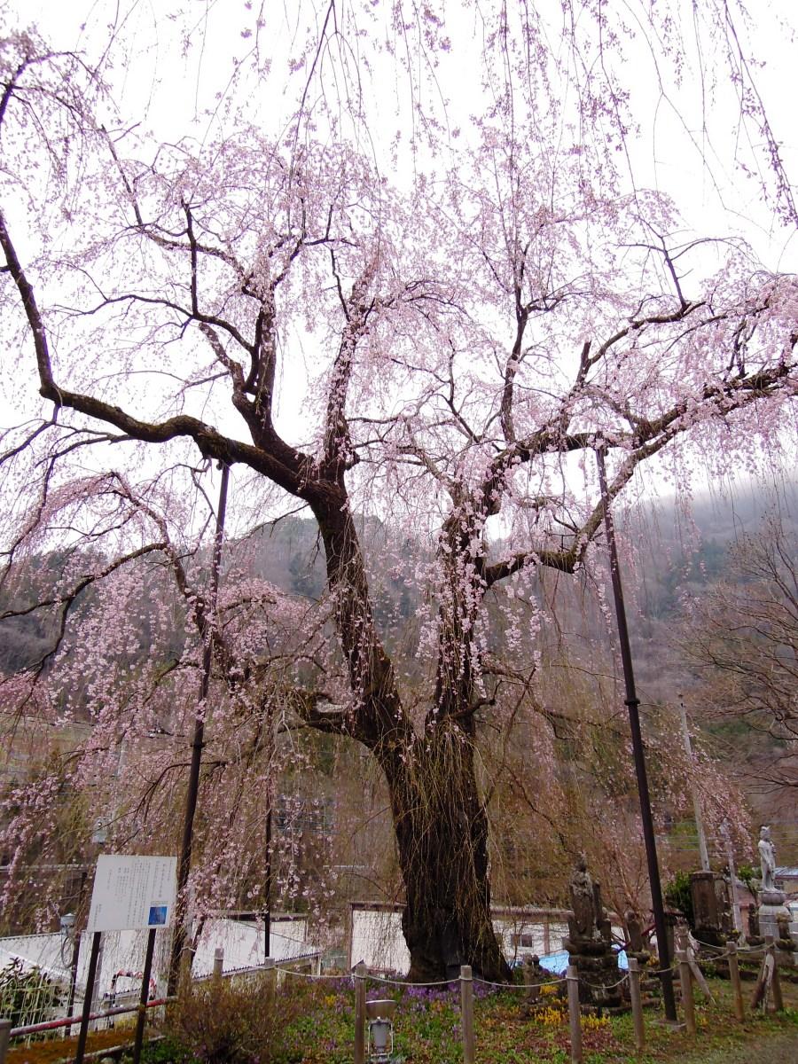 http://www.uenomura.ne.jp/blog/photonews2/DSCN6242-001.JPG