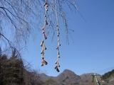 4月13日中正寺しだれ桜2.jpg