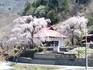 260415桜.JPG
