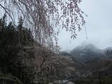 中正寺のしだれ桜と雪景色