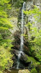 新緑の中止の滝