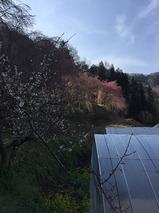 野栗地区_乃久里神社
